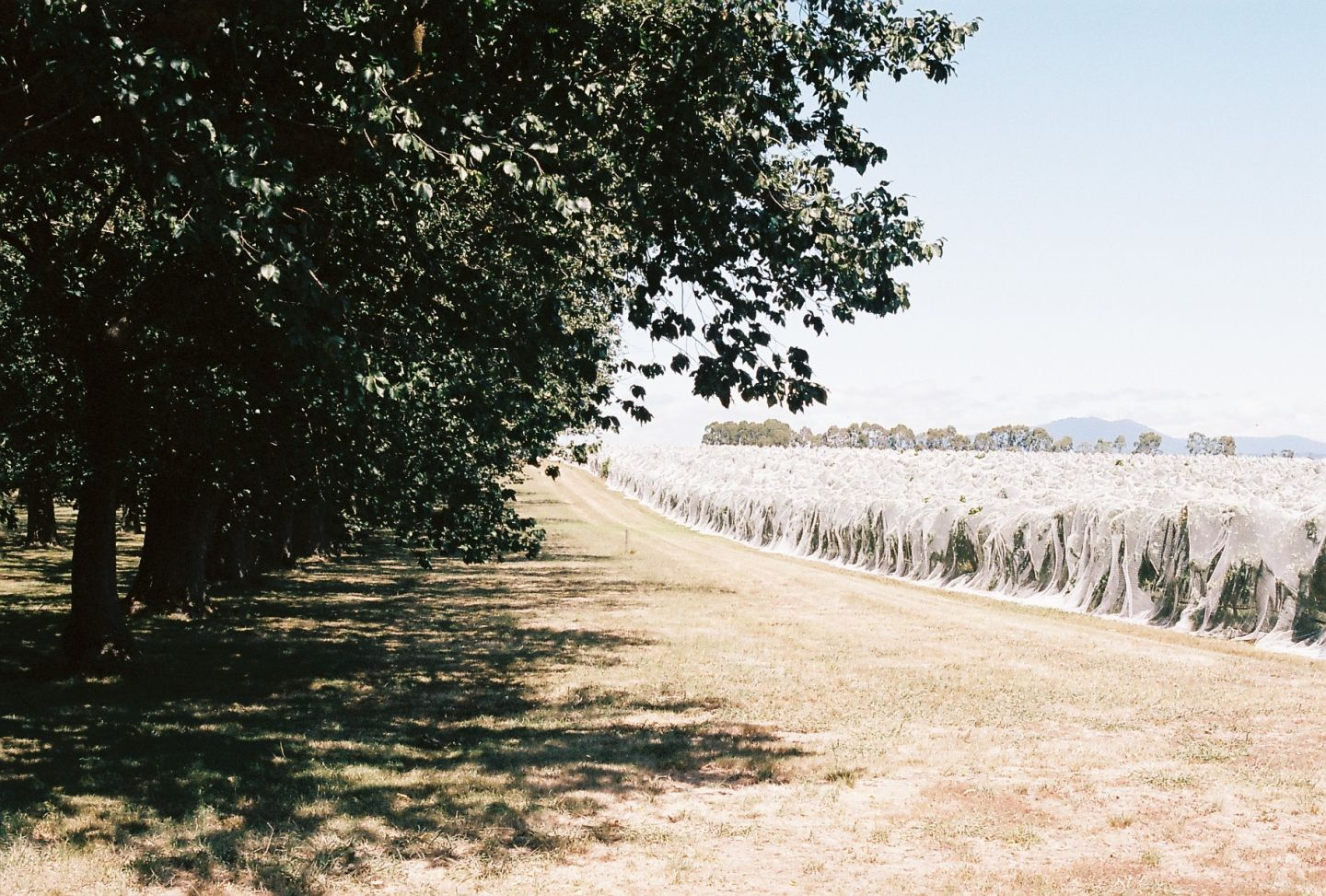 Lindsay | The Long, Slow Ripening of the Yarra Valley Grape: an Interview with Winemaker Darren Rathbone | Photo by Beth Wilkinson for Lindsay